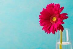 在一个玻璃花瓶的红色大丁草花 复制空间 库存照片
