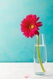 在一个玻璃花瓶的红色大丁草花 复制空间 免版税库存照片
