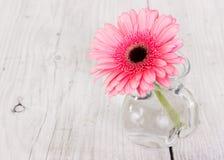 在一个玻璃花瓶的花桃红色大丁草 库存图片