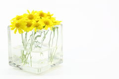 在一个玻璃花瓶的黄色雏菊 库存照片