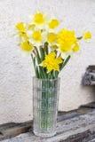 在一个玻璃花瓶的水仙花 库存图片