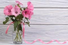 在一个玻璃花瓶的Lavatera桃红色花 免版税库存图片