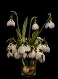 在一个玻璃花瓶的Snowdrop花 免版税库存照片