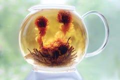 在一个玻璃茶壶的开花的茶 库存照片