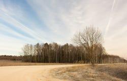 在一个冻结的冬天领域的小橡树 美好的横向 免版税库存照片