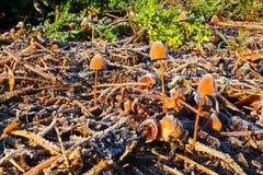 在一个冻结的基地的森林蘑菇 免版税图库摄影