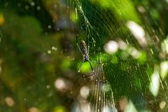在一个他的网的蜘蛛 免版税库存图片