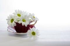 在一个洋红色瓷茶杯的雏菊 免版税库存图片