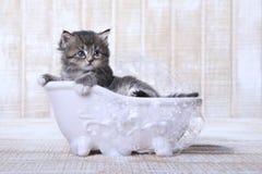 在一个浴缸的微小的小猫有泡影的 免版税库存图片