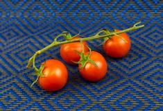 在一个绿色分支的蕃茄以闲话竹子布料为背景 免版税图库摄影