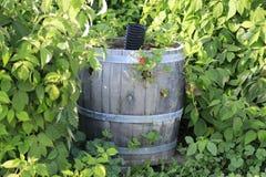 在一个绿色叶子暗藏的草莓补丁的葡萄酒桶 图库摄影