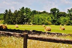 在一个绿色域的干草捆 库存照片