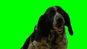 在一个绿色屏幕上的狗头