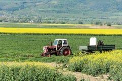 在一个黄色强奸领域的拖拉机在保加利亚 免版税库存照片