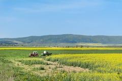 在一个黄色强奸领域的拖拉机在保加利亚 库存照片