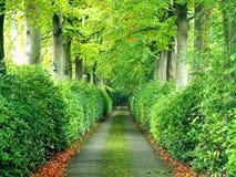 在一个绿色树自然隧道下的走道 免版税库存图片
