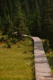 在一个绿色森林中的木道路方式 库存照片