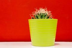 在一个绿色罐的仙人掌 库存照片