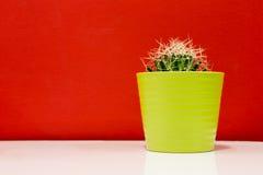 在一个绿色罐的仙人掌 免版税库存照片