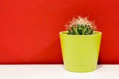 在一个绿色罐的仙人掌 库存图片