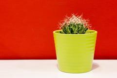 在一个绿色罐的仙人掌 免版税库存图片