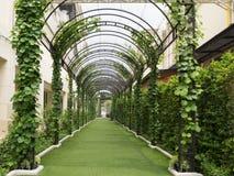 在一个绿色自然隧道下的走道 图库摄影