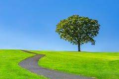 在一个绿色草甸的孤立树 库存照片