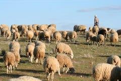 在一个绿色草甸的牧羊人和牧群 免版税图库摄影