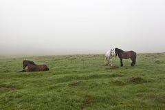 在一个绿色草甸11的马 库存照片