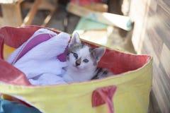 在一个黄色袋子的小的小猫 免版税库存照片