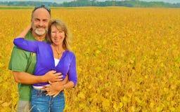 在一个黄色领域的一对爱恋的夫妇。 库存图片