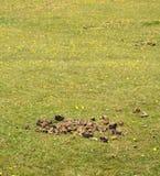 在一个绿色领域的马肥料 库存图片