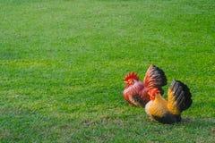 在一个绿色领域的鸡 图库摄影