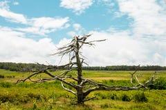 在一个绿色领域的死的树 免版税库存图片