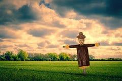 在一个绿色领域的稻草人 库存图片