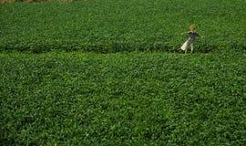在一个绿色领域的稻草人 免版税库存照片