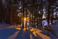 在一个冻Eagle湖的日落通过森林 免版税库存照片