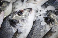 在一个col柜台的鲜鱼与冰 库存图片