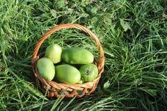 在一个wattled篮子的绿色蕃茄 库存照片