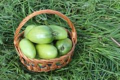 在一个wattled篮子的绿色蕃茄 免版税库存照片