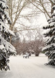 在一串公园足迹的公园长椅在亚伯大加拿大 免版税库存照片