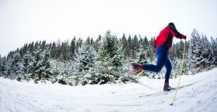 年轻在一串多雪的森林足迹的人速度滑雪 免版税库存图片