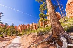 在一串足迹在布莱斯峡谷国家公园 库存照片