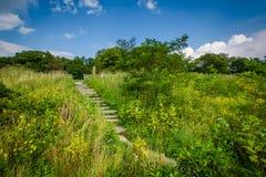 在一串足迹的台阶在Shenandoah国家公园,弗吉尼亚 库存照片