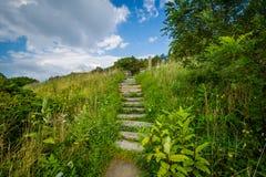 在一串足迹的台阶在Shenandoah国家公园,弗吉尼亚 免版税库存图片