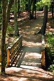 在一串晴朗的森林地足迹的桥梁 免版税图库摄影