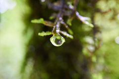 在一些绿色青苔边缘的露水  免版税图库摄影