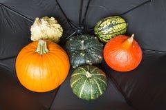在一伞/秋天和Ha的背景的秋天南瓜 免版税库存图片