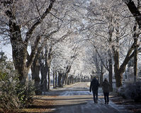 在一冷的12月天结合走在有冻树的胡同 免版税库存照片