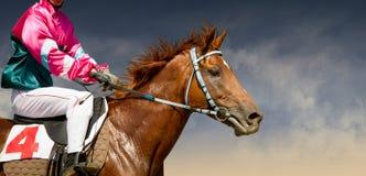 在一匹在颜色背景隔绝的良种马奔跑的Jokey 免版税库存照片